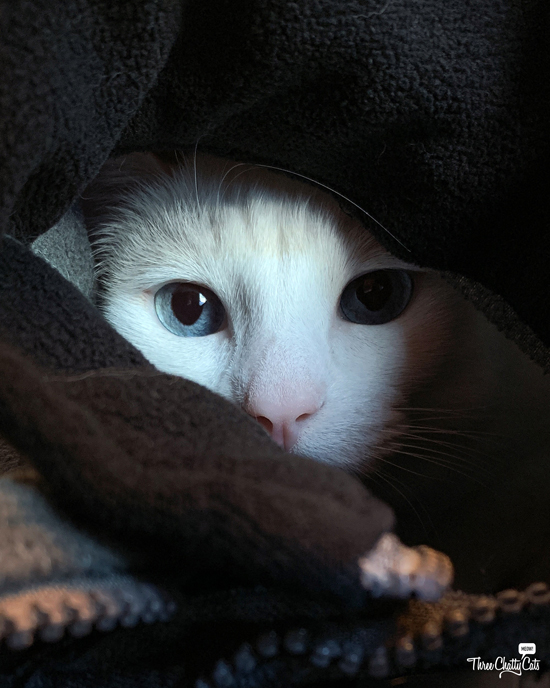 white cat cuddled in clothes