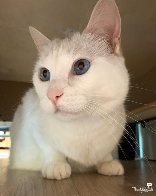white cat under ottoman