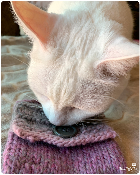 white cat investigating purse
