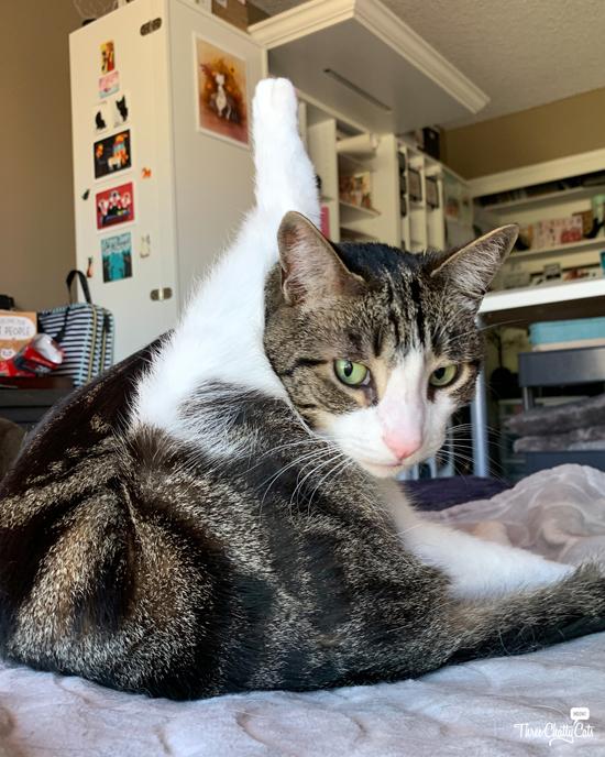 tabby cat grooming