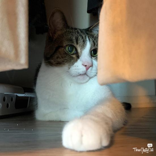 tabby cat in closet