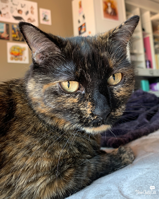 cute tortie cat with chin whiskers