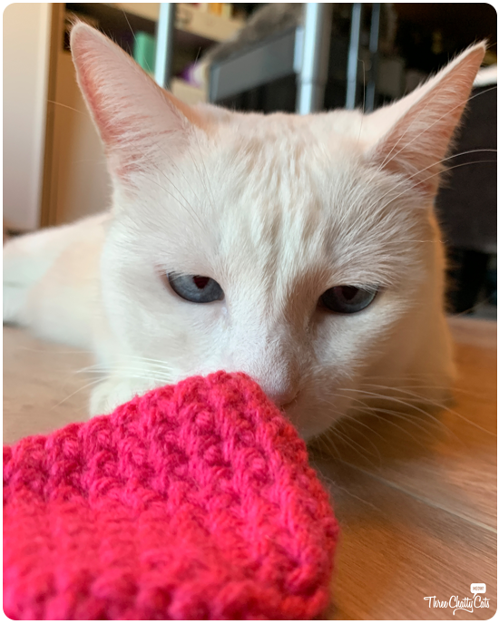 white cat staring at cat toy