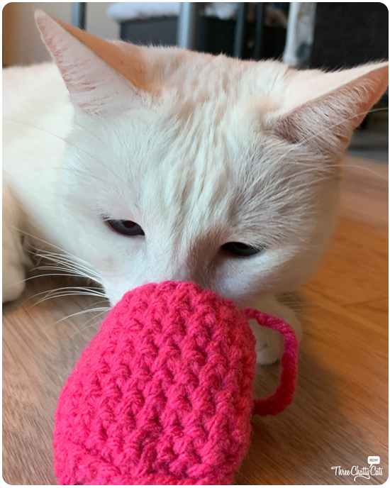 white cat sniffing at cat toy