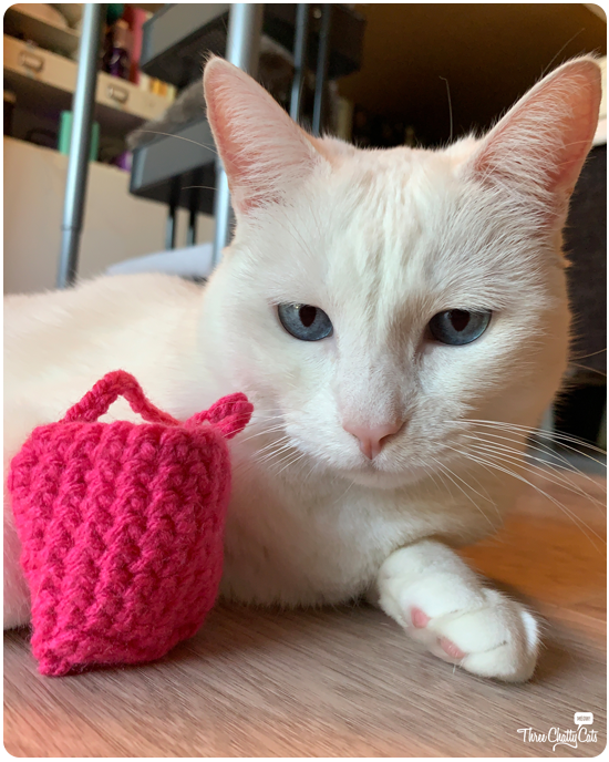 white cat with cute pink purse