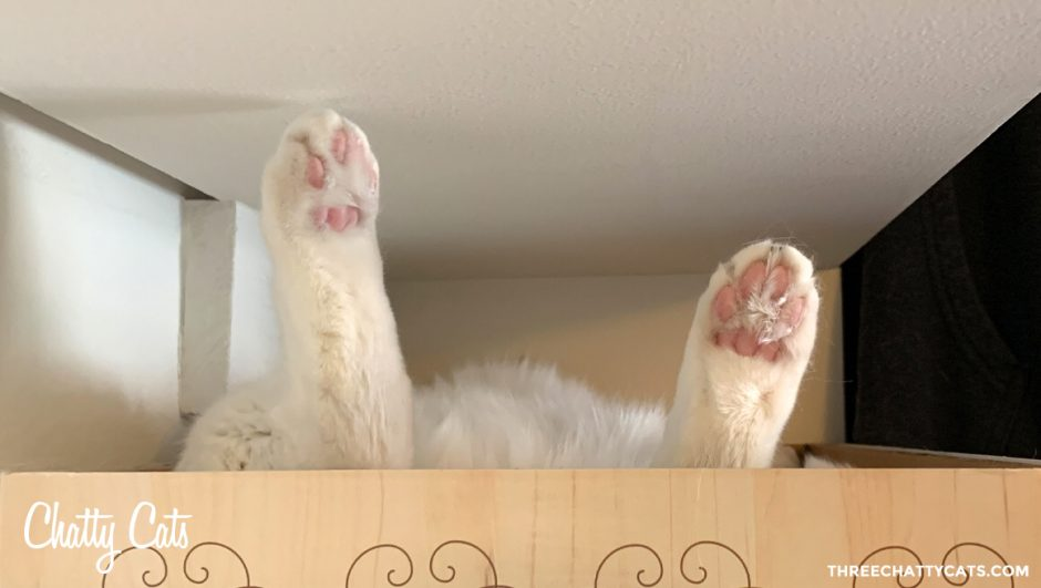 paws sticking up from cat in box