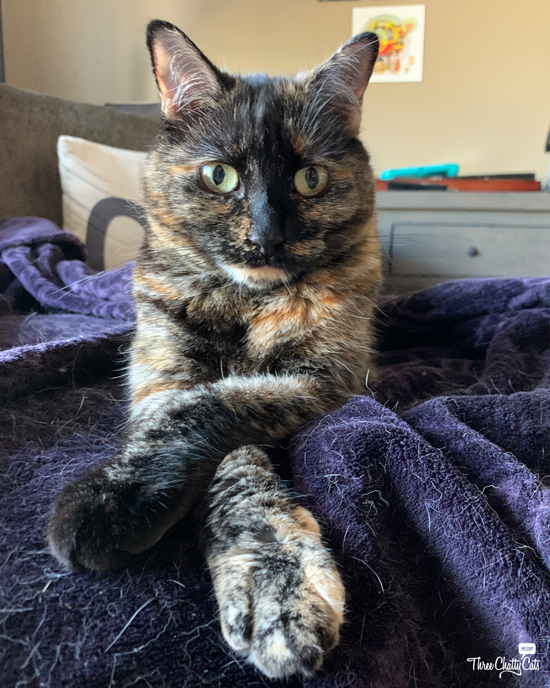 tortie cat with crossed paws