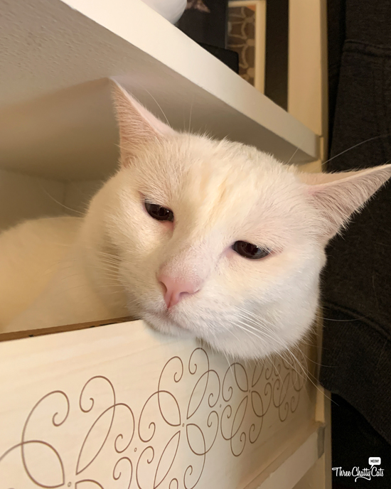 sad white cat