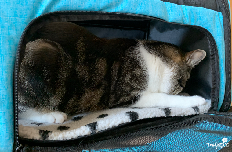 tabby cat in Lil Paws 5-in-1 Premium Pet Car Carrier