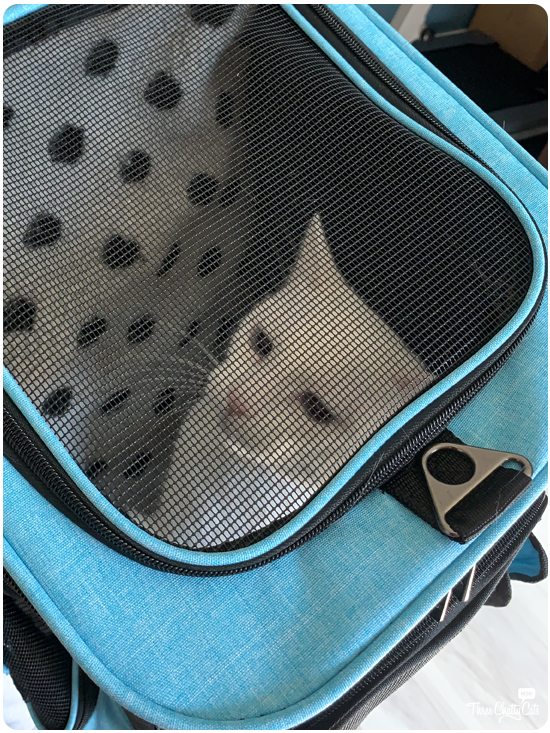 white cat in Lil Paws 5-in-1 Premium Pet Car Carrier