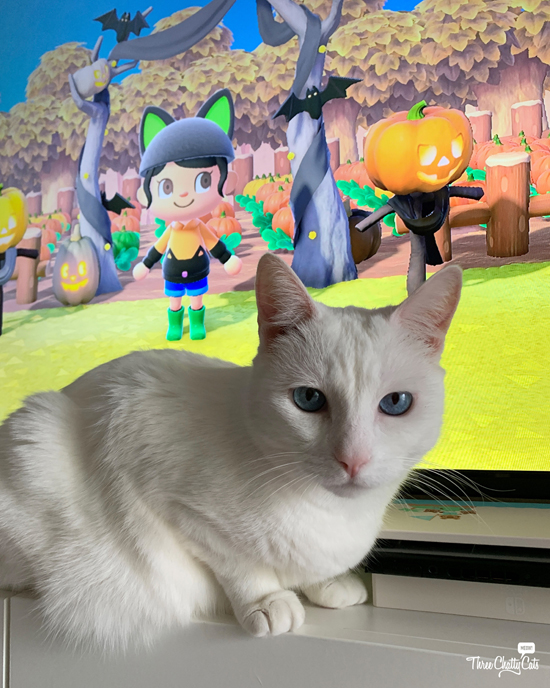 white cat in front of Animal Crossing game