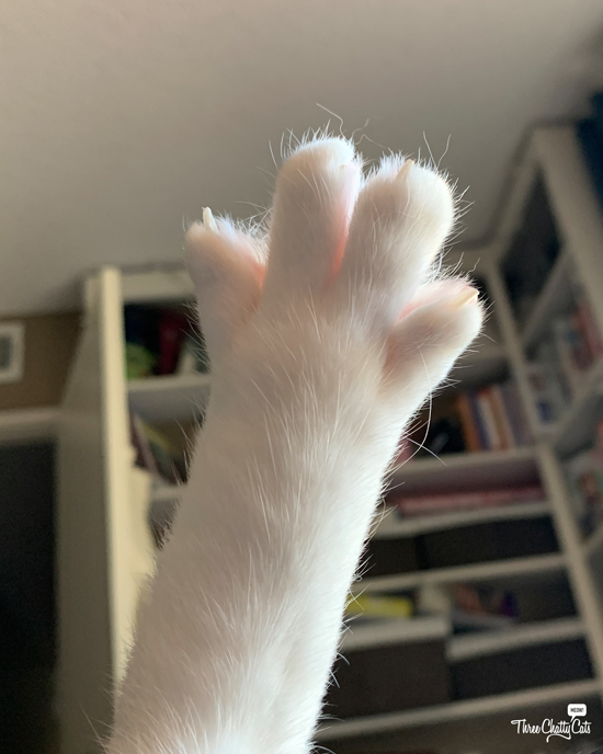 white cat paw