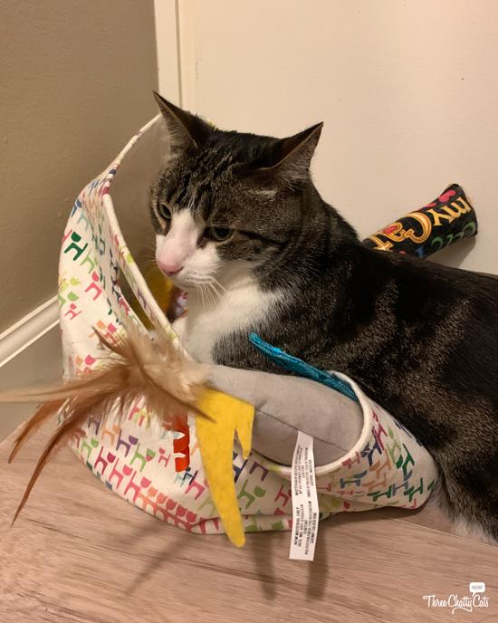 tabby cat in toy basket