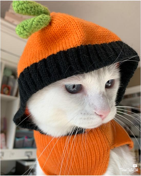 white cat in Halloween pumpkin outfir