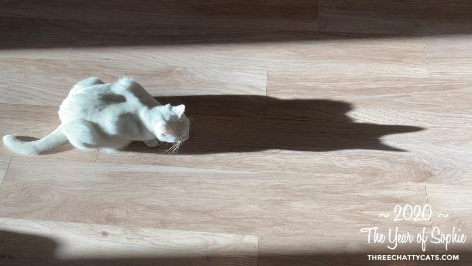 white cat with shadow