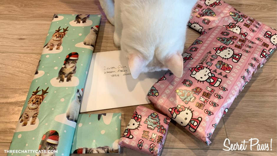 white cat sniffing presents