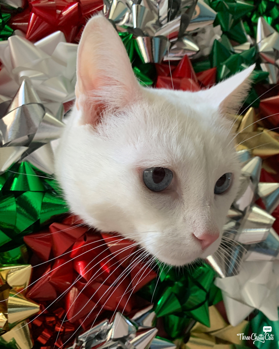 white cat with Christmas bows