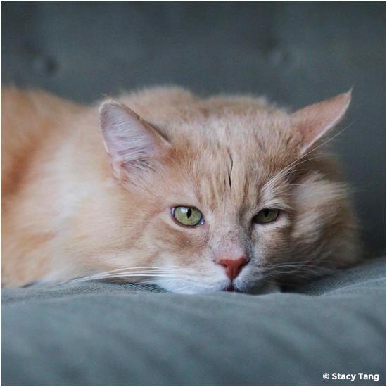 handsome ginger cat
