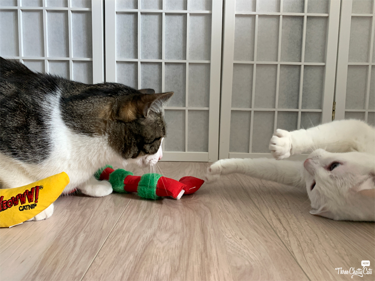 tabby cat and white cat playing