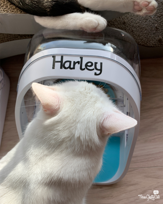 white cat with microchip pet feeder