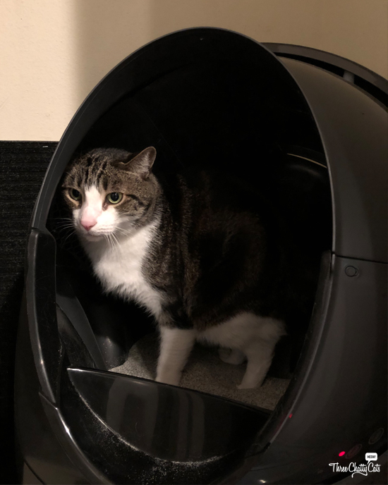 tabby cat using Litter-Robot