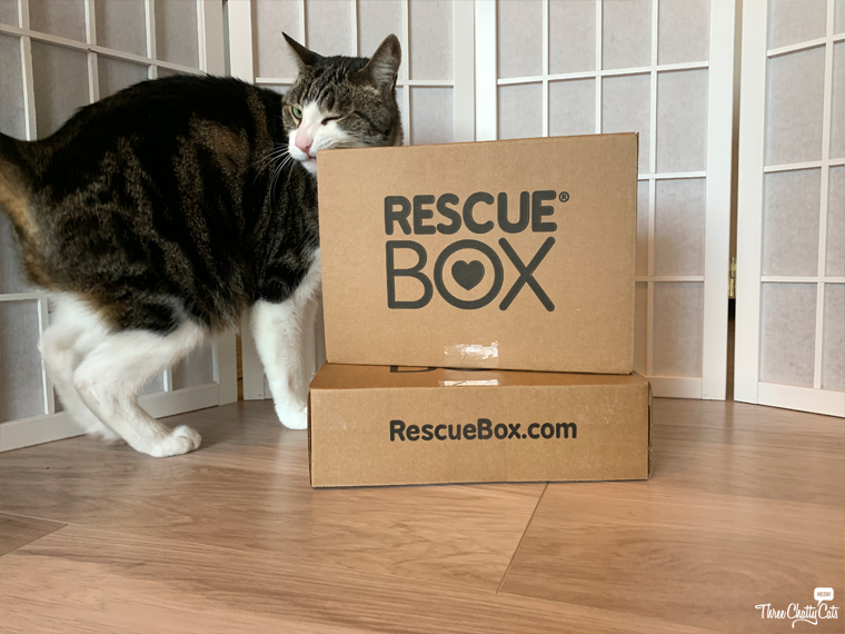 tabby cat with rescuebox