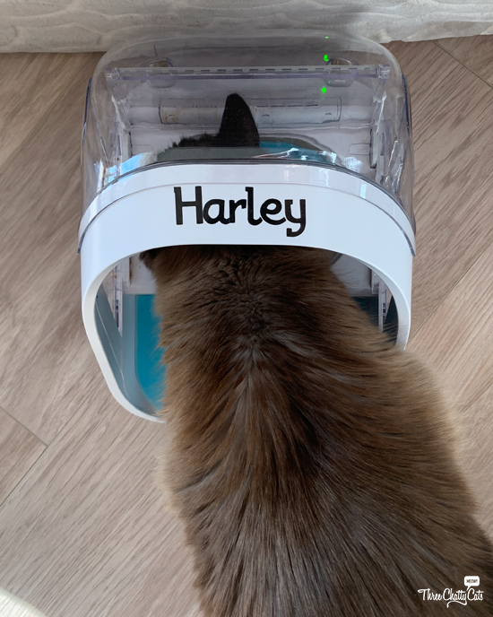 siamese cat using SureFeed Microchip Pet Feeder