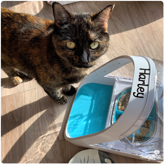 tortie cat with SureFeed Microchip Pet Feeder