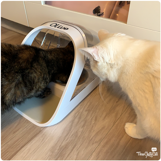 two cats with SureFeed Microchip Pet Feeder