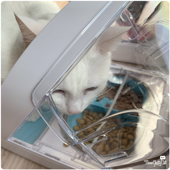 white cat with SureFeed Microchip Pet Feeder