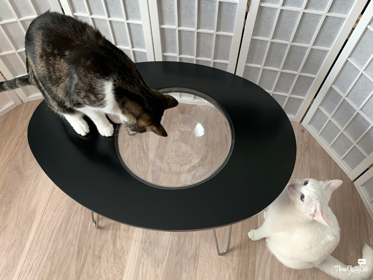 two cats with NestEgg Table