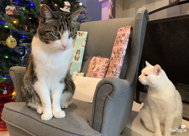 tabby cat with presents and white cat