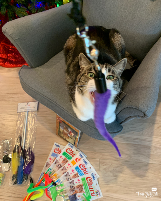 tabby cat with wand toy