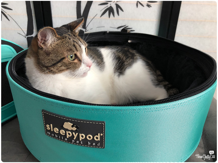 tabby cat in Sleepypod