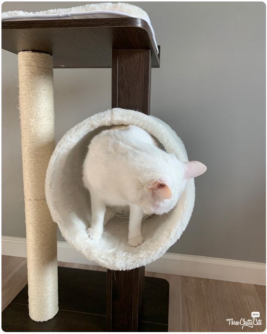white cat in Modern Cat Activity Tree & Scratching Post
