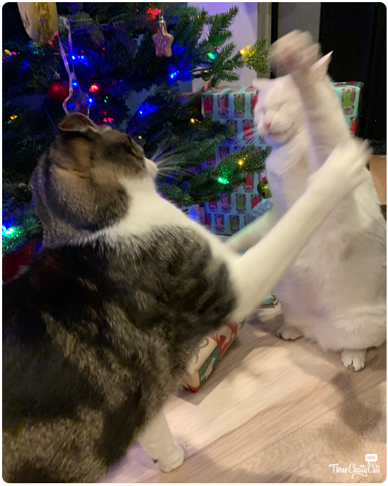 blooper photo of cats by Christmas tree