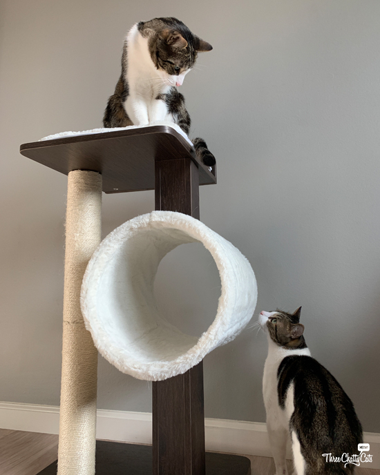 tabby cat on Modern Cat Activity Tree & Scratching Post
