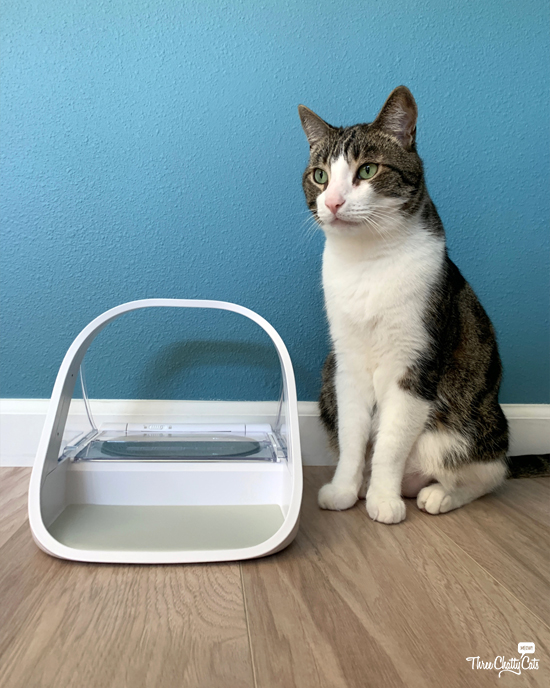 tabby cat with SureFeed Microchip Pet Feeder