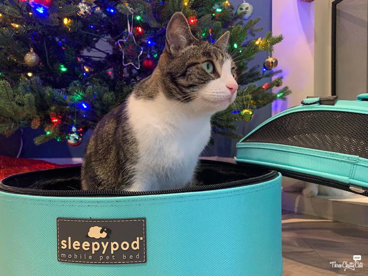 tabby cat in Sleepypod