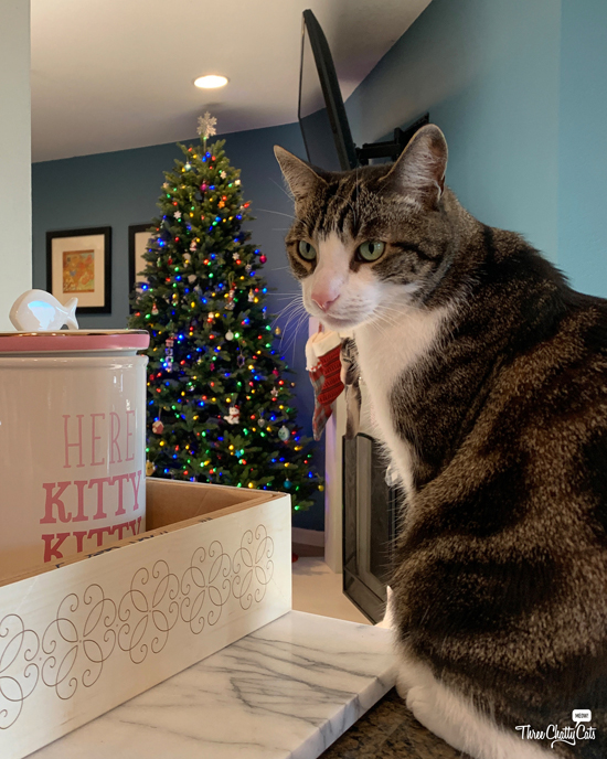 tabby cat on counter by treat jar