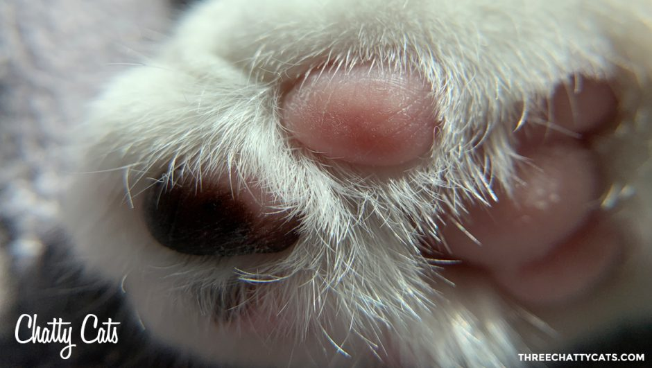 cat paw and toe beans