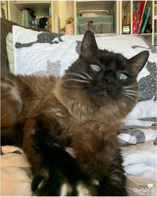 blooper photo of cat reaction
