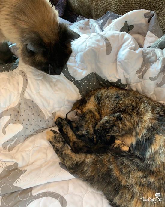 cat checking on sleeping cat