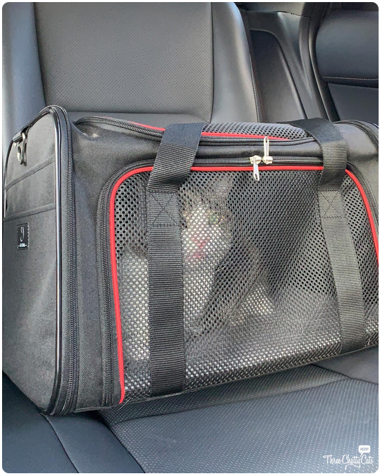 tabby cat in carrier