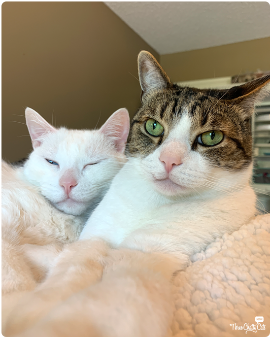 tabby cat and white cat