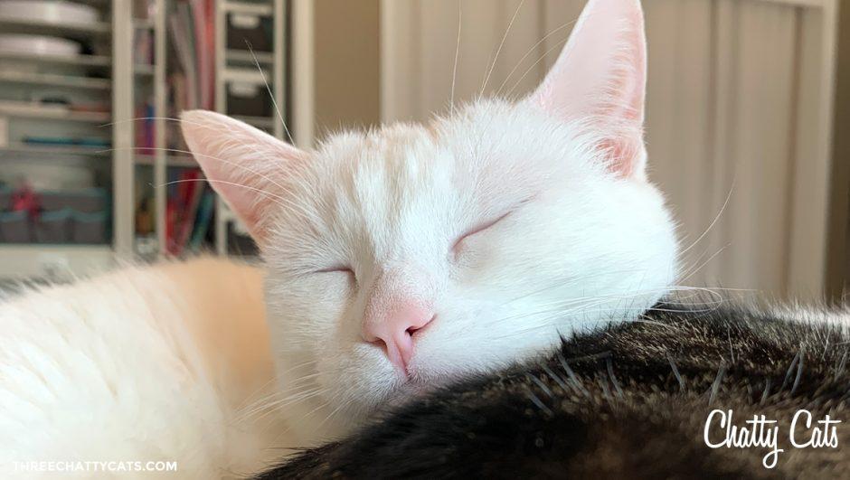white cat sleeping on back of tabby cat