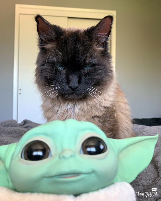 baby yoda (grogu) with unamused siamese mix cat