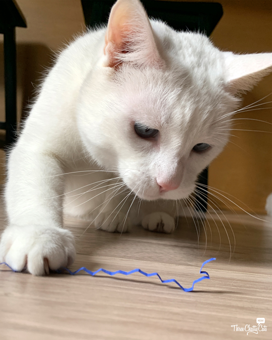 white cat playing with paper
