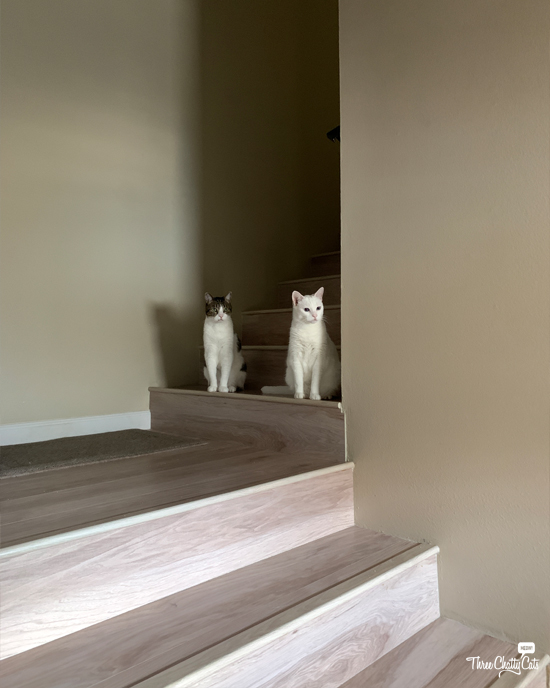 two cats sitting on stairs