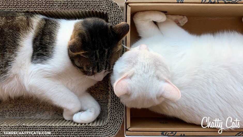 tabby cat and white cat together